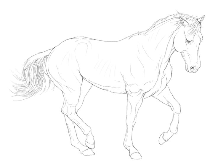 Line Drawing Quiet : Best horse lineart images on pinterest horses