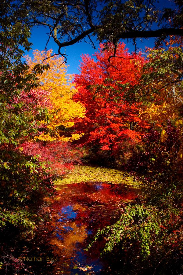 ~~autumn colors ~ amazing fall colors, Harriman State Park, New York by Nathan Brisk~~ //自分の持っている紅葉の写真と色味が全然違う。