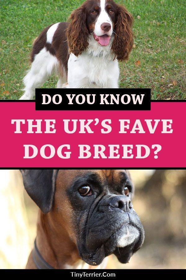 Chart Of Terrier Breeds Dog Breeds List Terrier Breeds Dog Breeds