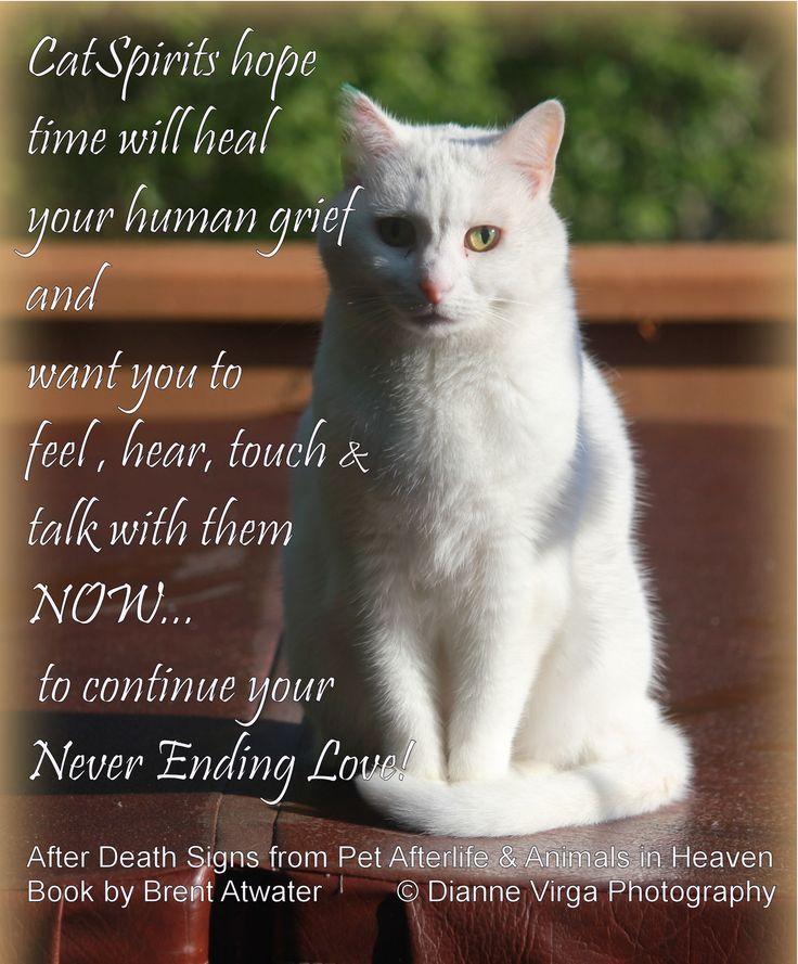 Cat Quotes: 25+ Best Ideas About Cat Memorial On Pinterest