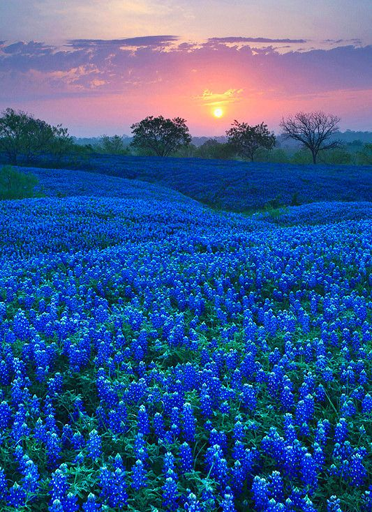 Colour My World Blue Roses Flowers Beautiful Places Texas