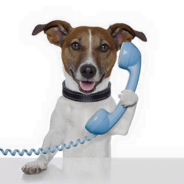 Bookings are now coming in for the June and September school holidays. Call or message to organise your holiday pet care and speak to one of our trusty call centre helpers...  #doggysleepover #petvisit #destinationwarrnambool #dogs3280 #love3280 #warrnambool3280 by petnannie