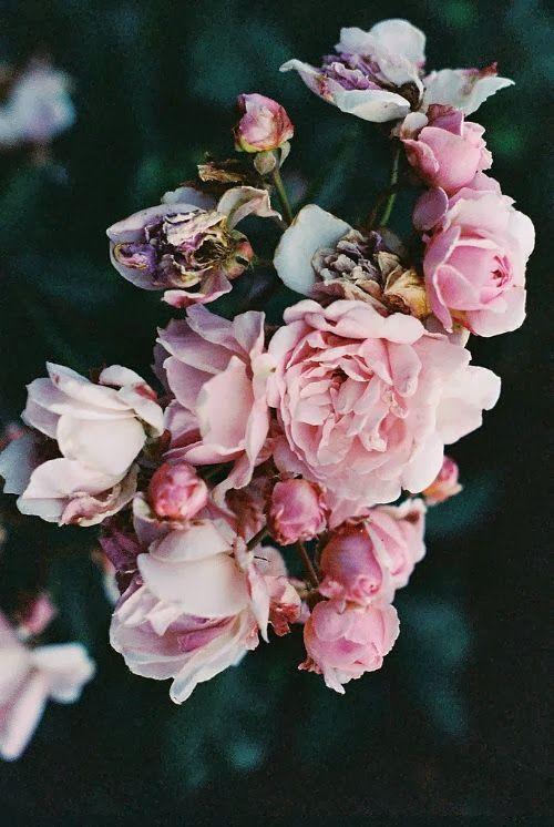 ❈ Fleurs Foncées ❈ dark art photography flowers & botanical prints -