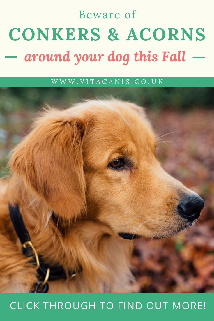 Blog Fall Breeze And Autumn Leaves Blog Dogs Dog Training