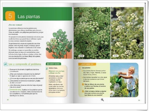 """Unidad 5 de Ciencias de la Naturaleza de 4º de Primaria: """"Las plantas"""""""