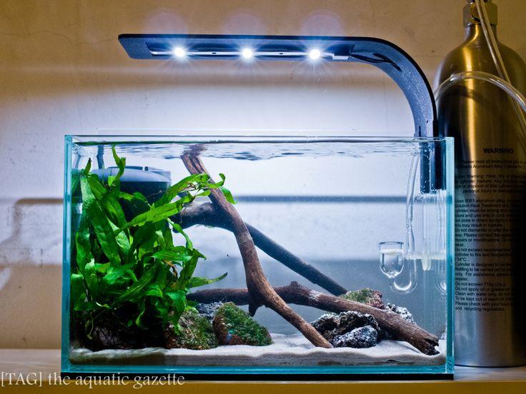aquascape / planted tank