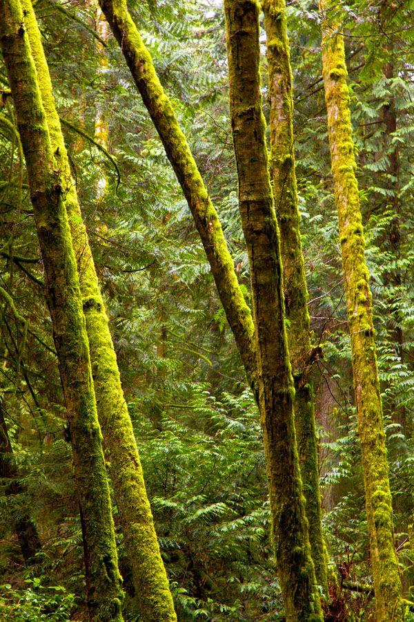 The Rainforest of Cliff Gilker Park on the Sunshine Coast.