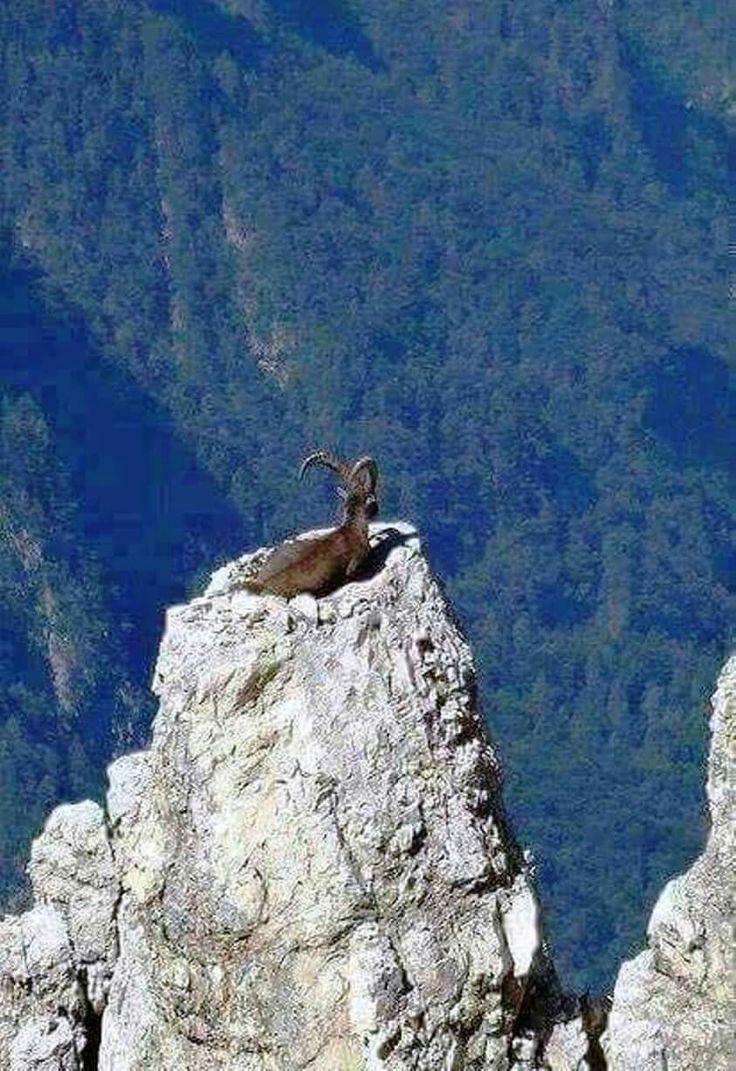 Wow, die heeft geen hoogtevrees! Wat een uitzicht!