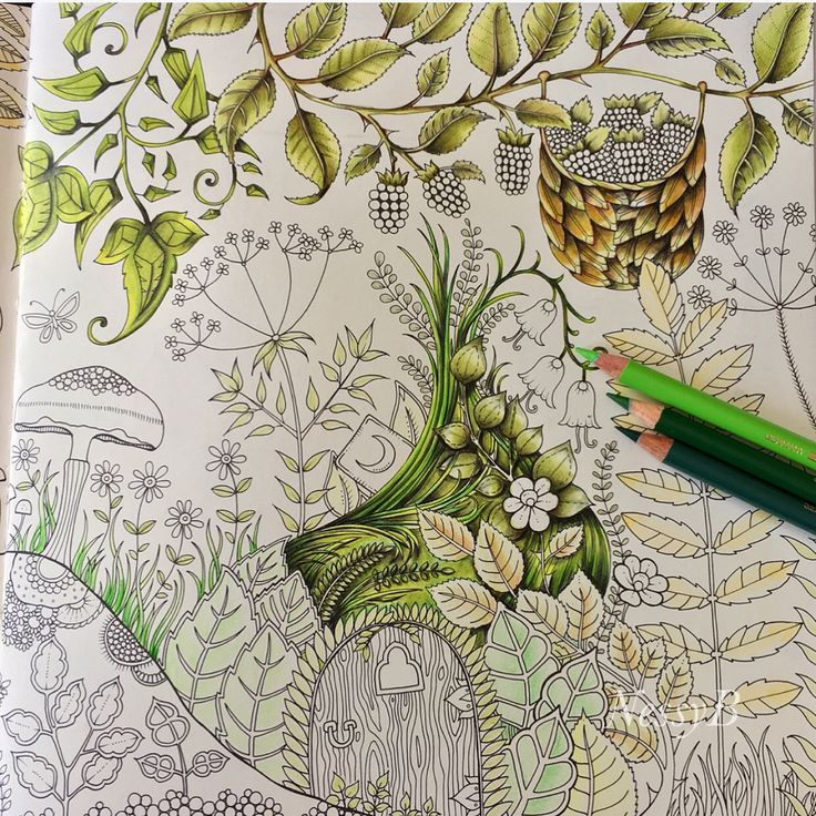 Enchanted Forest/WIP/Johanna Basford/ polychromos pencils/ colouring book/ Ness Butler/