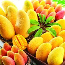 2016 Hot Sale Giant Mango Bonsai Seeds Fruit Tree Seed Mango Tree Plant For Garden Diy Pot Plante Gift 5 Pcs/ Bag(China (Mainland))