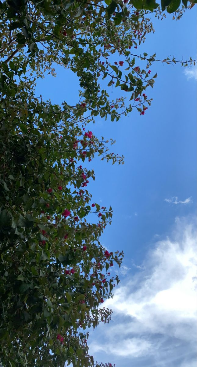 حبك سماء Photo Clouds Outdoor