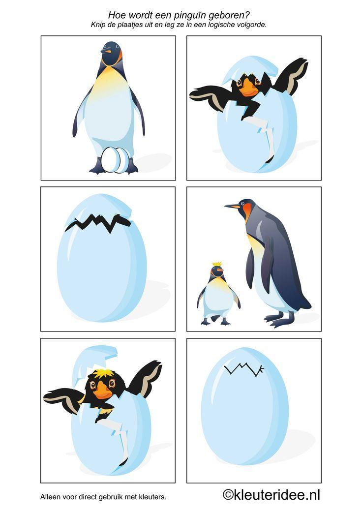 Pingouins qui sort de sa coquille. Images séquentielles du pingouin et son petit.