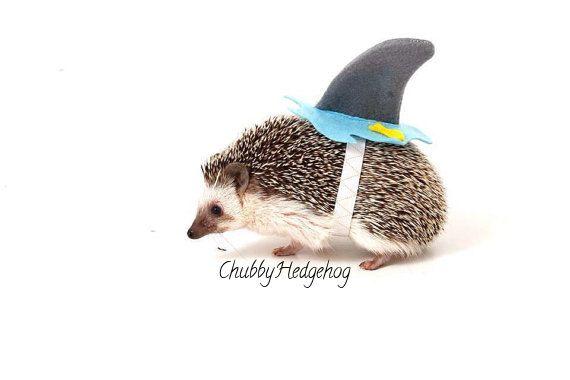 Hedgehog /  Guinea pig Shark costume