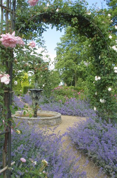 English Rose Garden. I can just smell the lavender. #pergola Perfect combination of blue catmint & pink roses