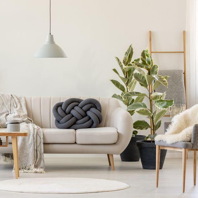 The 10 Best Indoor Trees You Can Buy On Amazon Happy Living Rooms Beige Sofa Best Indoor Trees