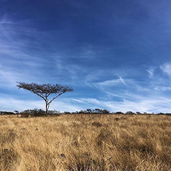 Be warned. South Africa will steal your heart and keep it forever.  (scheduled via http://www.tailwindapp.com?utm_source=pinterest&utm_medium=twpin&utm_content=post107906327&utm_campaign=scheduler_attribution)