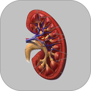 Creatinine Clearance by AIMapps by A.I.M. Applications Informatisees en Medecine Inc