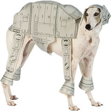 20 cool halloween costumes for large dogs