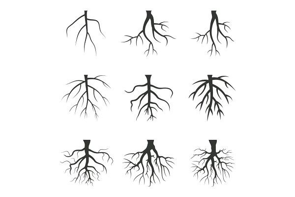 Root Tree Roots Tattoo Tree With Roots Drawing Roots Drawing