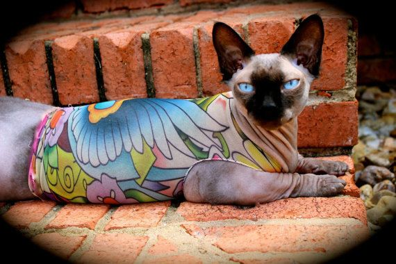 Sphynx Cat Clothes Lucky's Birds Tattcat™ for your pet. Tattoo illusion pet clothes for your hairless or furry dog or cat. on Etsy, $25.00