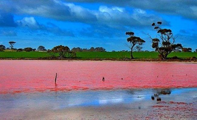 Detours - Le lac rose de l'Australie sur detours.canalplus.fr/article/escapades/Vt7Z2igAAIQTilUn/le-lac-rose-de-laustralie
