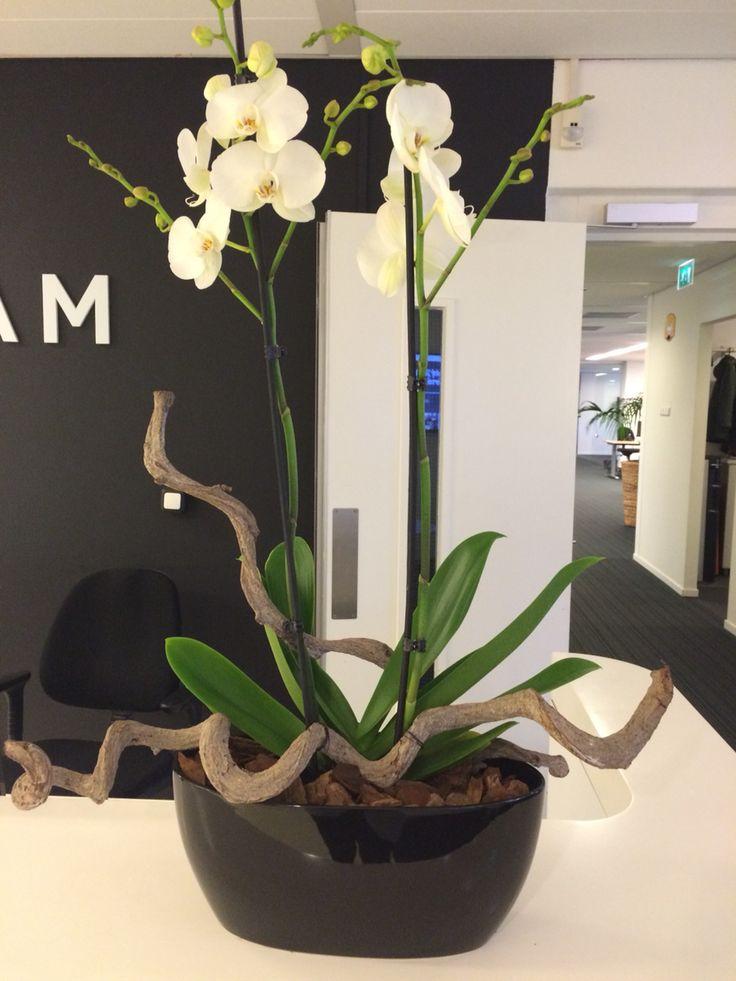 die besten 17 bilder zu orchidee auf pinterest orchideen krepppapier und modernes wohnen. Black Bedroom Furniture Sets. Home Design Ideas