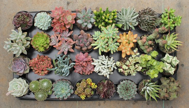 Don't have a succulent green thumb? Don't worry, this article's for you!