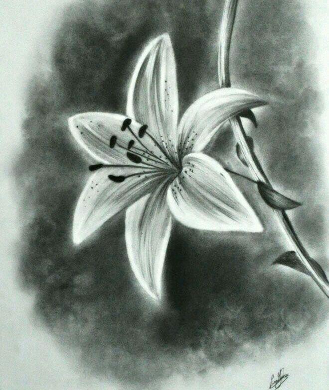Dibujo. | Bocetos de flores, Flores dibujadas a lapiz, Dibujos
