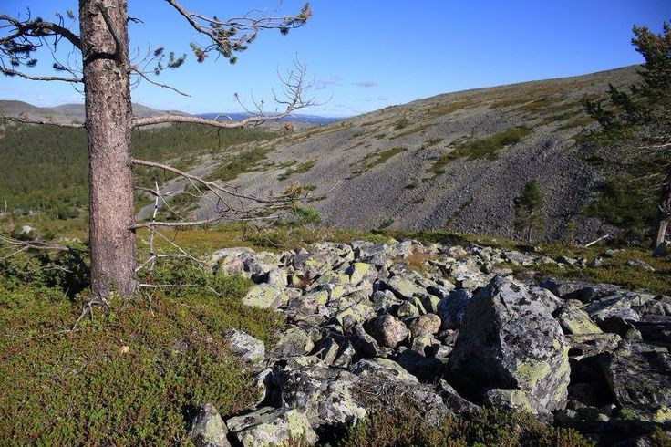 Hiking at Ylläs fell in Lapland Finland.