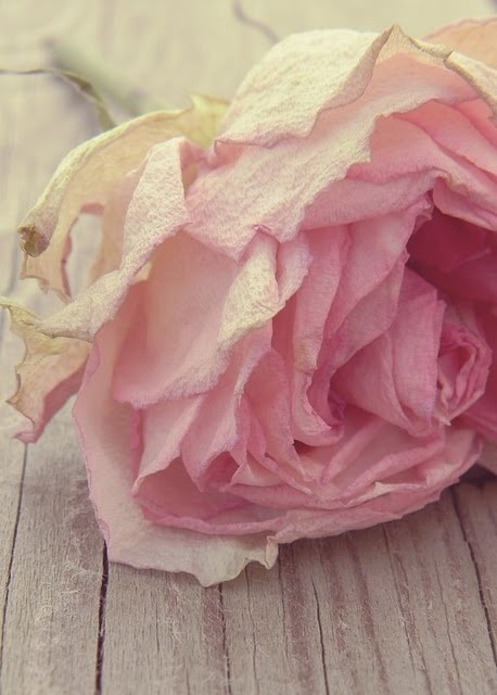 .: Bachelorette, Rose Gardens, Cotton Candy, Vintage Pink, Hue, Tissue Paper, Beautiful Pink, Pink Rose, The One