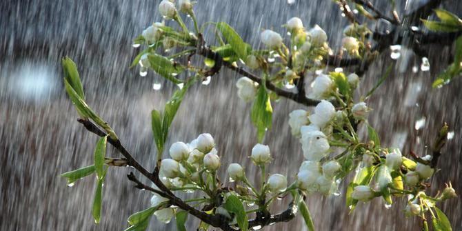 fakta tentang hujan