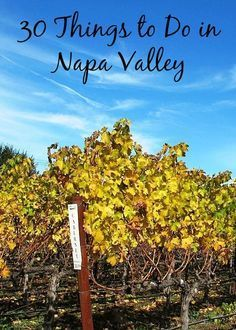 30 Things to Do in Napa Valley, California   Any of these sound good, but especially #18. Stop at Bounty Hunter. Eat fantastic BBQ while choosing from their extensive list of rare wines available by the glass at this popular tasting bar.