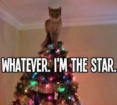 Yeah, one our sweet kitties used to love climbing our Christmas tree too!! Cute and funny photo from a Facebook friend!!