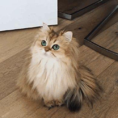 Sanatlı Bi Blog Dünya'nın En Fotojenik Kedisi Smoothie ile Tanışın 27