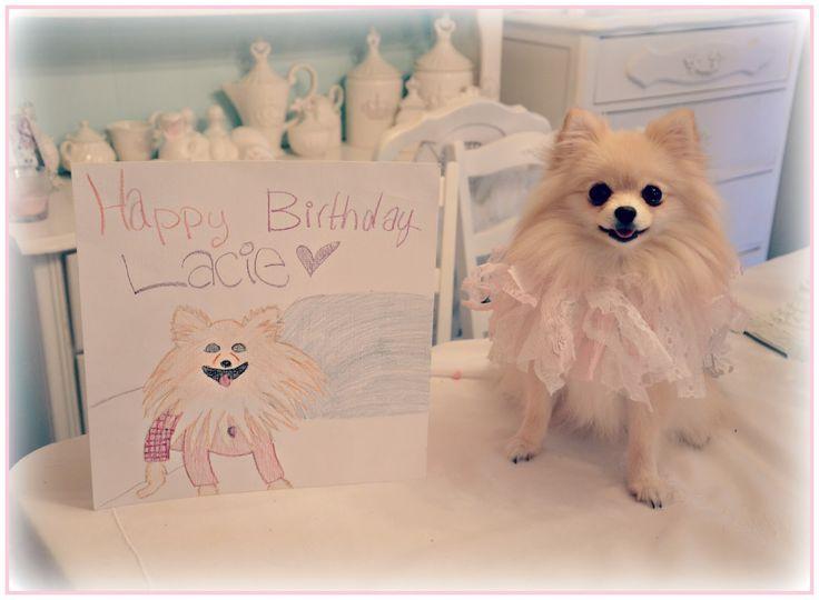 Pomeranian #birthday