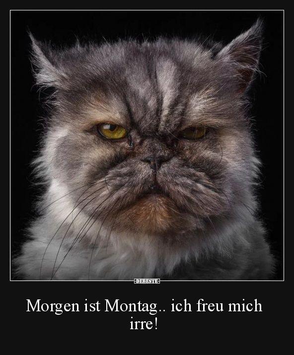 Morgen ist Montag.. ich freu mich irre! | Lustige Bilder, Sprüche, Witze, echt lustig