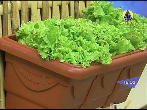 Santa Receita   Aprenda a fazer uma mini horta em casa! - 15 de Maio de 2014 - YouTube