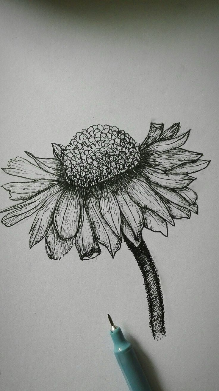 Art, black and white, flower, pen,