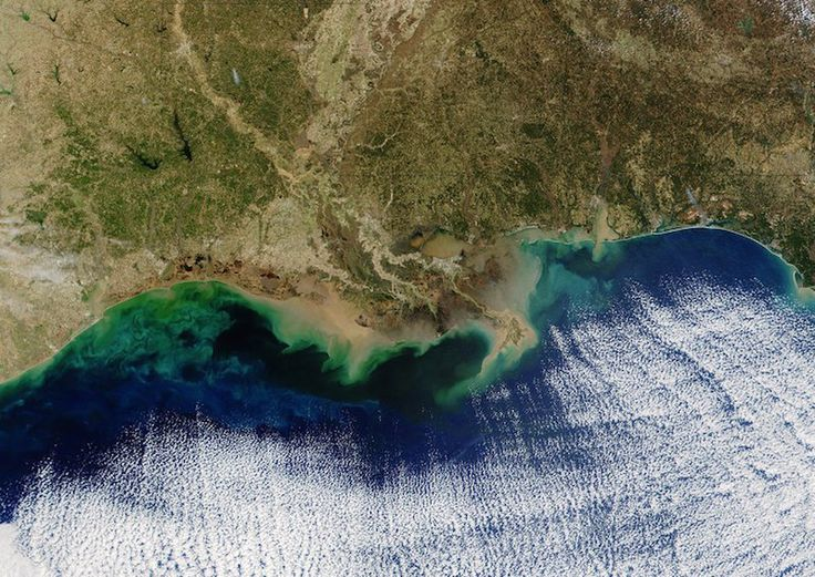 Over 8,000 square miles of the Gulf of Mexico has been turned into a dead zone, thanks to manure and chemical runoff from massive meat processing factories spilling into the Mississippi River delta…