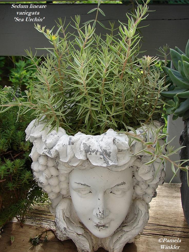 17 best images about head planters on pinterest gardens medusa head and sculpture - Medusa head planter ...