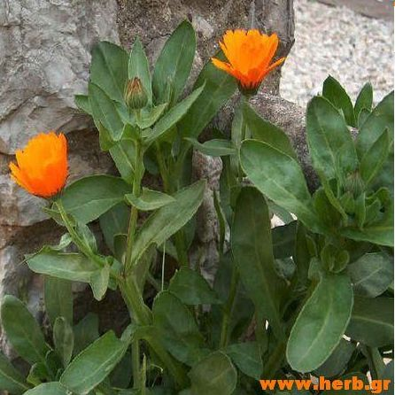 Η ΛΙΣΤΑ ΜΟΥ: Βότανα και ουλίτιδα!