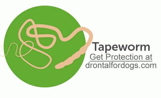 Tapeworms Echinococcus Species Taenia Dipylidium Caninum Dogs Health Pinterest