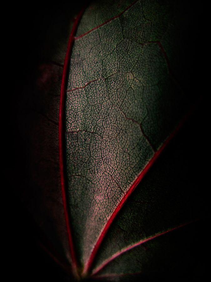 : Natural Patterns, Beautiful Leaf, Baspunk Deviantart Com, Color, Black Leaf, Red Leaves, Texture Leaf, Leaf Artfulabstract, Leaf Texture