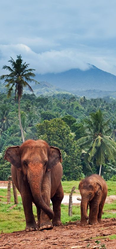 An Elephant Mom With Her Young Calf in Pinnawala, Sri Lanka.