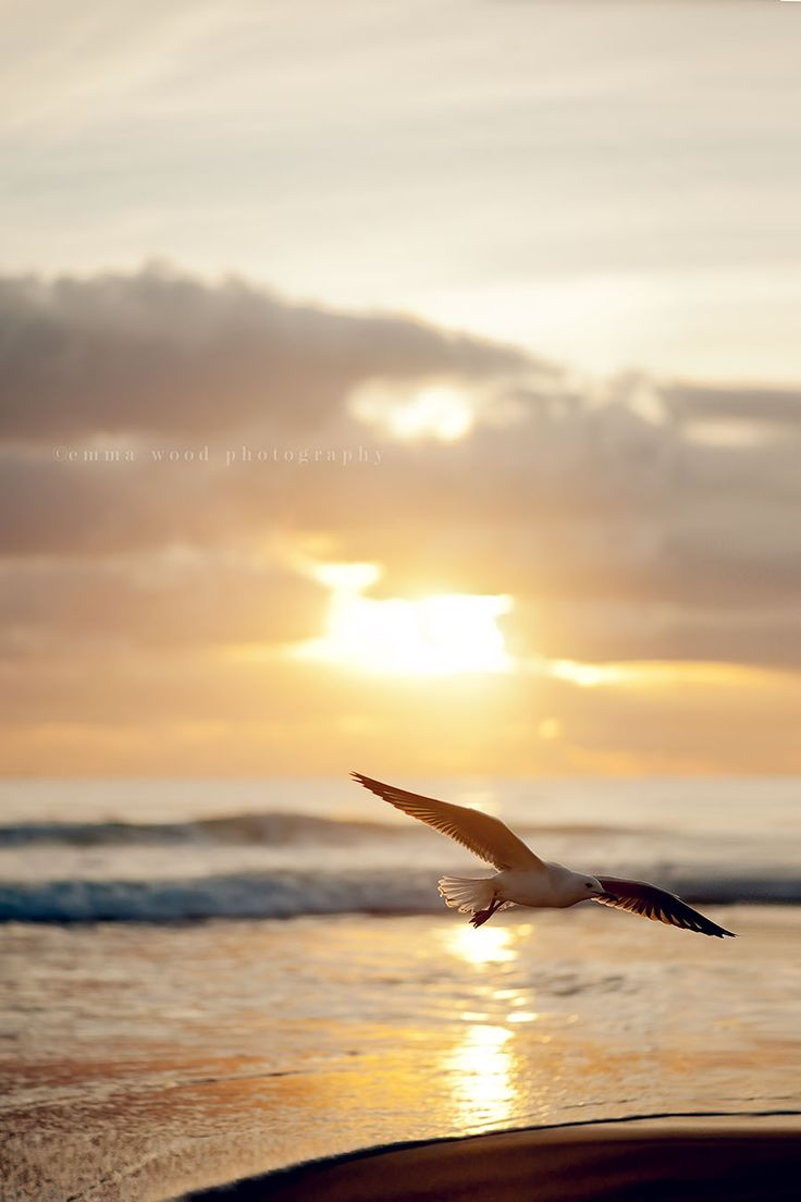 """O pássaro que se separa de outro, vai voando dando adeus o tempo todo."" - Guimarães Rosa"