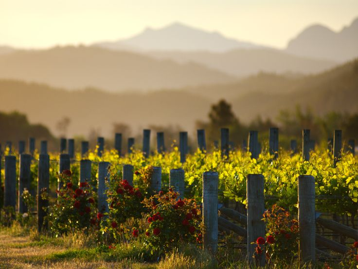 You don't have to go to Tuscany to drink world-class Sangiovese or Montepulciano. Turns out, some of the world's best Italian wine is made in Middle-earth. #wine #wineeducation