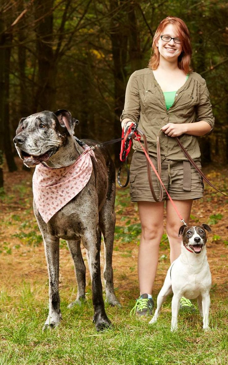 Morgan The Great Dane, World's Tallest Female Dog