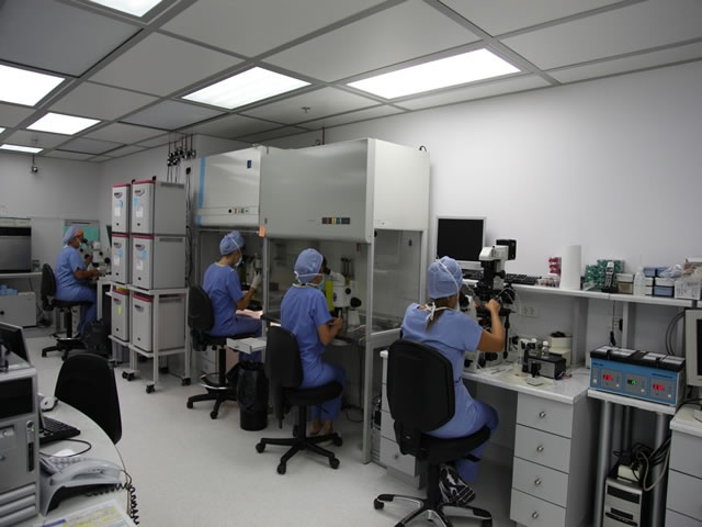 Embryogenesis - Assisted Conception Unit