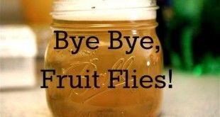Get Rid oF Fruit Flies
