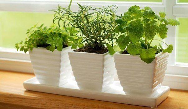 5 натуральных удобрений для домашних цветов. 1. Подкормка растения бананами....